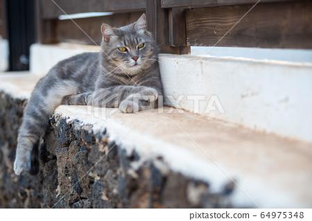 gray cat lying in the garden 64975348