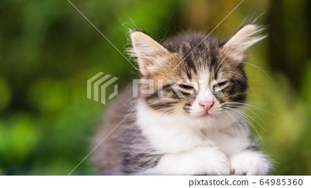 Cute Little Cat	 64985360