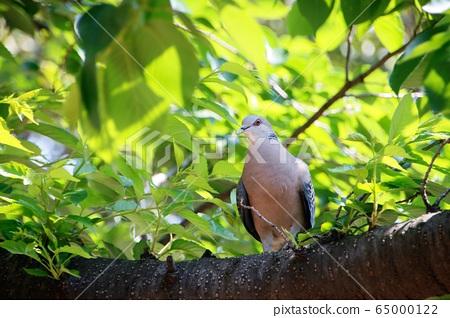 一棵樹上休息的鳥 65000122