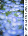 喜林草 65002783