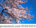 櫻桃樹 65003054