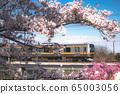 櫻花下的火車 65003056