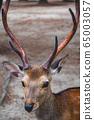 一隻鹿 65003057