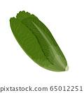 Fresh green Romaine Lettuce. Fresh leaves isolated on white background. 65012251