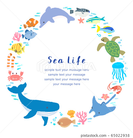 海洋生物 65022938
