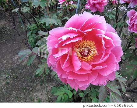 꽃 65026916