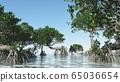 Red mangroves on Florida coast 3d rendering 65036654