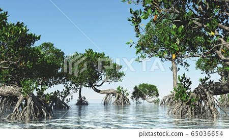 Red mangroves on Florida coast 3d rendering 65036654