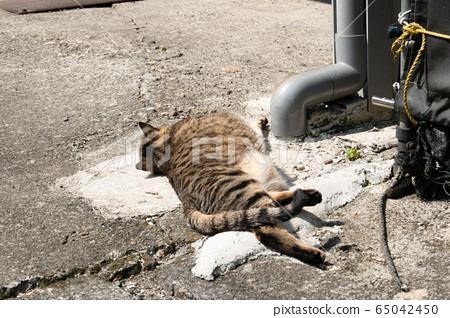 lazy tabby cat sleep on a ground 65042450