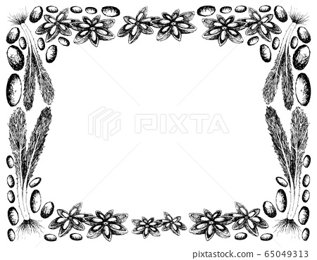 Hand Drawn of Culantro with Star Anise Frame 65049313