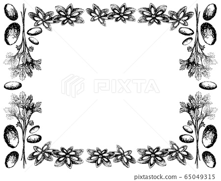 Hand Drawn of Coriander with Star Anise Frame 65049315