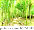 Bamboo forest and bamboo shoots 65059883