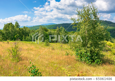 young forest on the meadow in mountains. summer 65061486