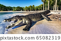 The crocodile rests by the river 3d rendering 65082319
