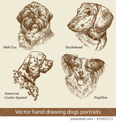 Set of hand drawing dogs 65083251