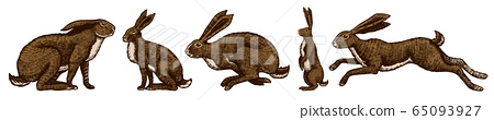 Wild hares set. Rabbits are sitting and jumping. Forest bunny or coney Collection. Hand drawn 65093927