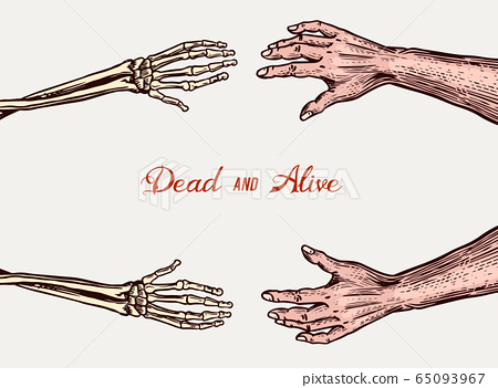 Human and Skeleton hands. Bony arm. Dead and alive concept for halloween banner or poster. Drawn 65093967