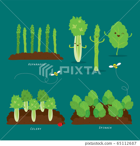 Set of Vegetable garden. Organic and healthy food Cartoon Vector illustration. 65112687