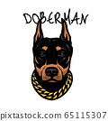 Doberman s head with a chain on his neck. Vector illustration. 65115307