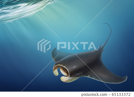 Manta floats top view under water. Manta isolated on ocean background. Giant sea devil is a realistic illustration. 65133372