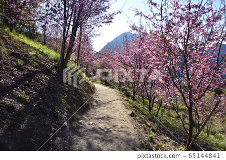 신 마을, 신주 현, 시마시 마을, 벚꽃, 길, 산 65144841