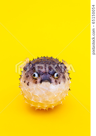Hedgehog fish. Lose weight for summer concept. 65150054
