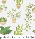 Veclor seamless pattern with house indoor plants on white background 65162064