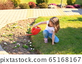 Little girl watering flowers from a red watering can on a flower bed 65168167