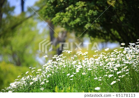 봄,과수원농장,풍경 65178113