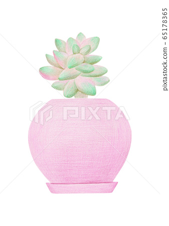 肉質植物花盆彩色鉛筆素描 65178365