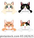 貓上身橫幅套裝 65182625