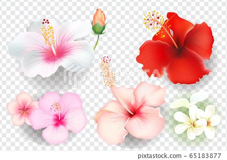 在透明背景上設置的現實矢量熱帶花卉 65183877