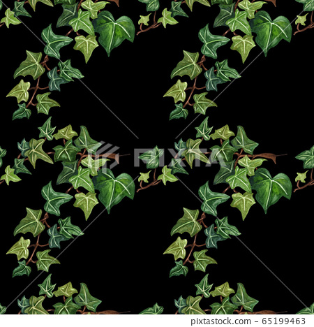 Watercolor seamless botanical ivy illustration. Botanical seamless pattern from ivy twig. Hand painted green ivy leaves, black background. 65199463