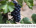 Close up of wine grapes and green leaves in 65223336