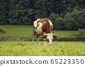 Photo of brown and white cow on green sunny 65223350