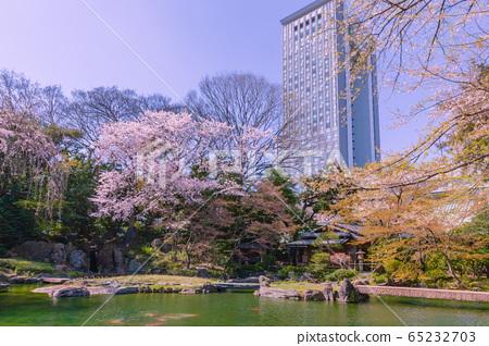 櫻花盛開的花園靖國神社 65232703