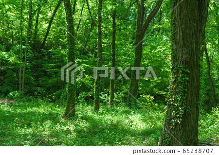 5月新鮮綠色森林綠色圖像 65238707