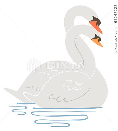Swan Entwine Neck Courting Illustration 65247222