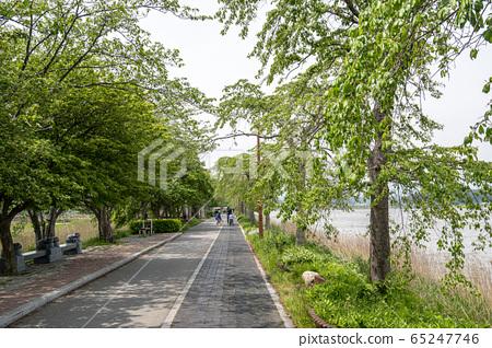 Gyeongpoho lake trails 65247746