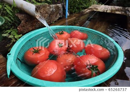 Tomato 65268737