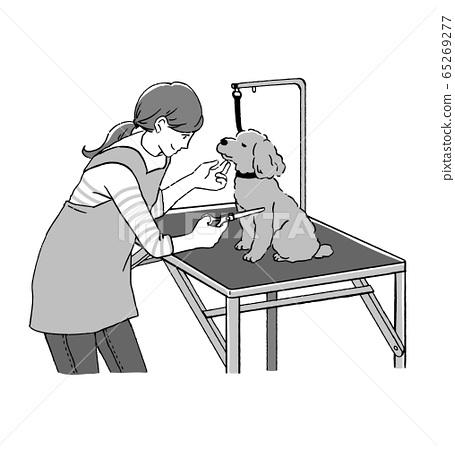 女性修剪器和玩具貴賓犬修剪用剪刀的線條藝術插圖 65269277