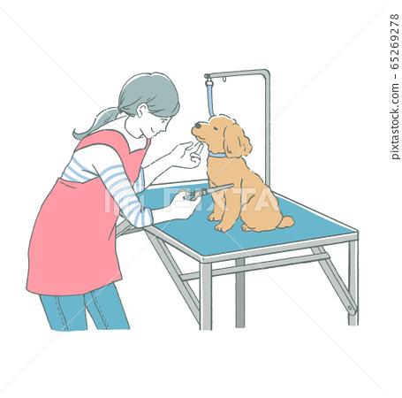 女性修剪器和玩具貴賓犬修剪用剪刀的線條藝術插圖 65269278