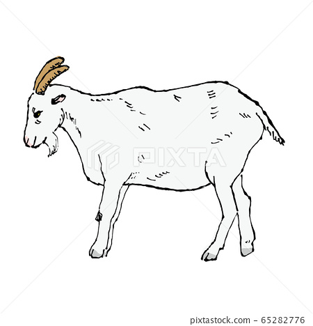 山羊 65282776