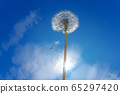 Dandelion fluff against the blue sky 65297420