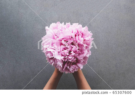 Hands holding beautiful bunch of fresh fluffy pink peonies in full bloom. 65307600