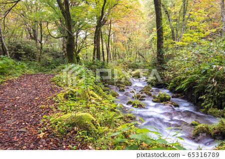 Autumn leaves promenade Oyama Kitanizawa mountain stream autumn scenery 65316789