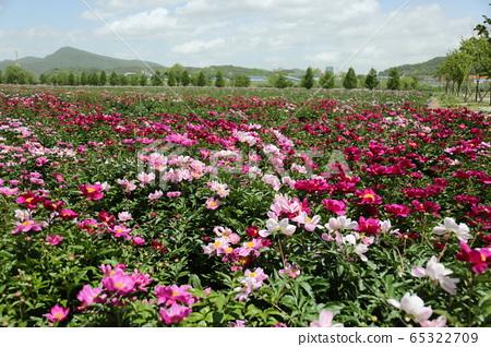八田郡庆南,哈德生态公园 65322709