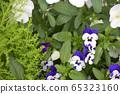 Viola sorbet XP Coconut กระโดดขึ้น 65323160