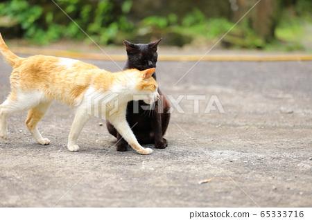 自由猫日常 65333716