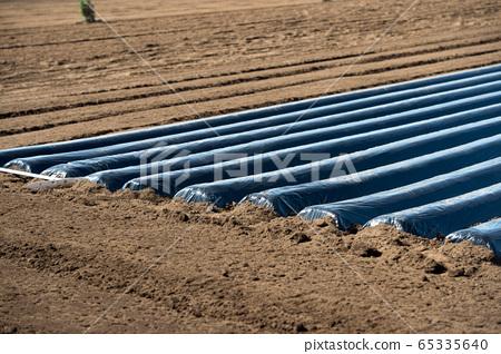 多片復耕黑膜農戶馬鈴薯土豆馬鈴薯種子馬鈴薯種植 65335640